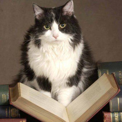 Як написати розповідь про тварину?