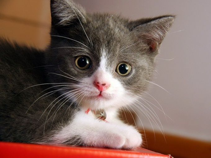 як кажуть на котячому мовою