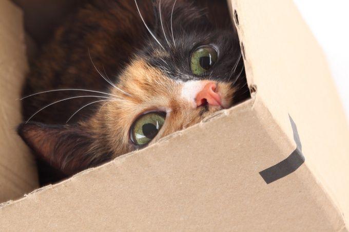 як дізнатися коли кішка буде народжувати