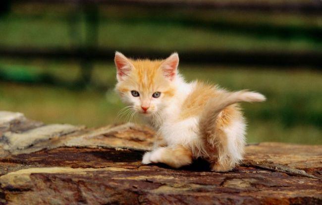 Як дізнатися, що у кота глисти