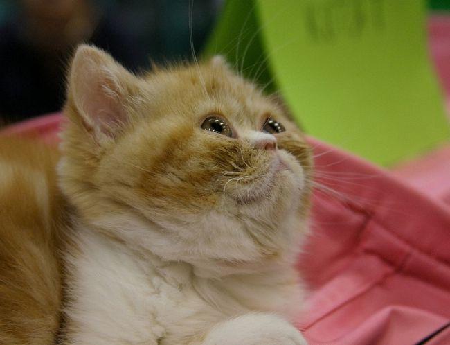 як дізнатися чи є глисти у маленької кішки? живіт надувся сильно
