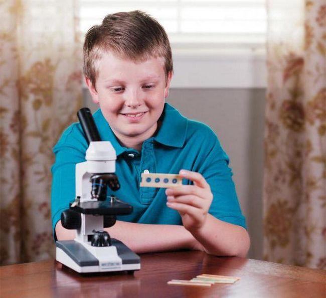 Як вибрати мікроскоп для школяра?