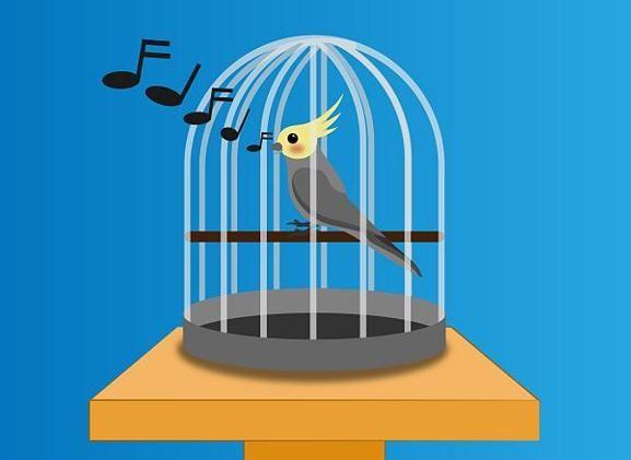 Клітка своїми руками для папуги. Як зробити клітку папузі