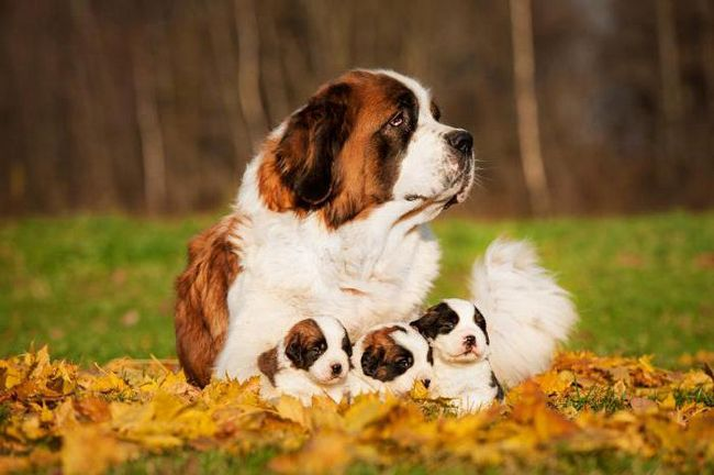мастометрін інструкція із застосування для собак