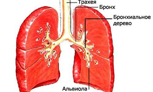 Антибіотики при бронхіті: коли необхідно робити уколи