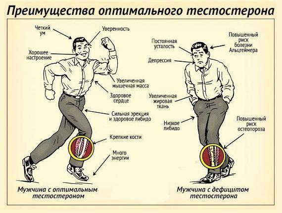 Особливості впливу тестостерону на організм чоловіки