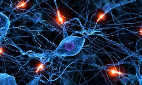 За що відповідає рефлекторний принцип діяльності нервової системи?